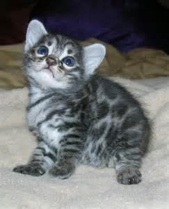 Snow Cute Baby Kittens