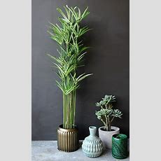 How To Have Pots Of Fun With House Plants Whether They Are