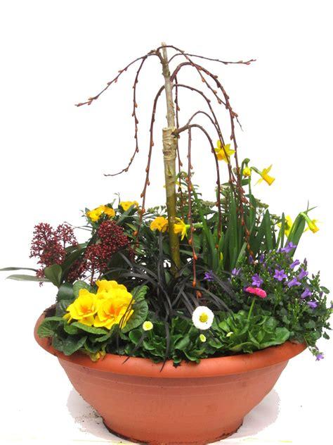 Im Kübel by Pflanzen Set F 252 R Schale Und K 252 Bel Gro 223 Fr 252 Hling Pflanzen