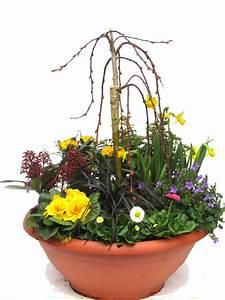Pflanzen Kübel : pflanzen set f r schale und k bel gro fr hling pflanzen ~ Pilothousefishingboats.com Haus und Dekorationen