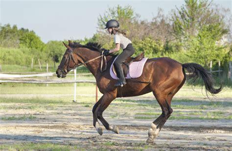 kinder und pferde die leidenschaft fuers reiten