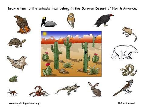 desert habitat matching desert animals