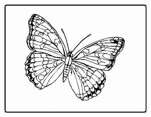 cute butterfly coloring pages - coloring pages of butterfly awesome and cute animals