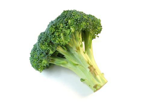 broccoli stock photo freeimagescom
