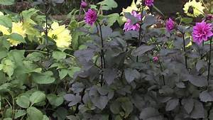 Gardening Tips   What Does Phosphorus Do For Plants