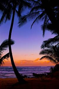 Silhouetted palm trees - tropical beach sunset - Maui   Flickr