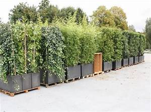 Sichtschutz Immergrün Winterhart : sichtschutz k belpflanzen pflanzen f r nassen boden ~ Markanthonyermac.com Haus und Dekorationen