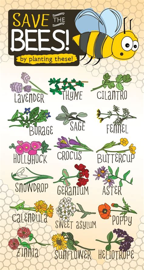 save the bees by planting these