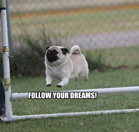 Know Your Meme Dog - follow your dreams dogs know your meme