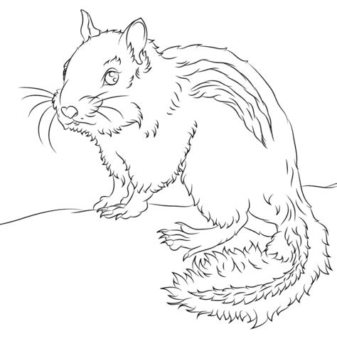 chipmunk coloring page  printable coloring pages