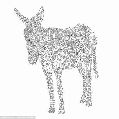 Colouring Adults Animal Coloring Pages Books Kingdom