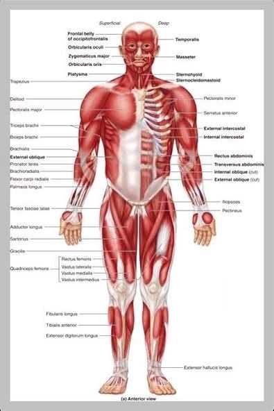 human body parts  label labels