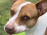 Adoptable Dog: Diamond Is Forever For Right Family | Land ...