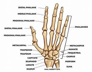Parts Of The Hand Diagram