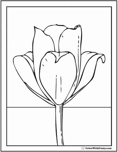 Tulip Coloring Flower Single Pages Pdf Colorwithfuzzy
