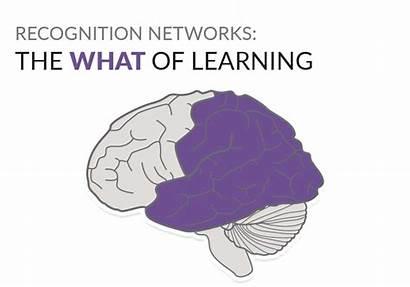 Learning Universal Cast Representation Brain Udl Language