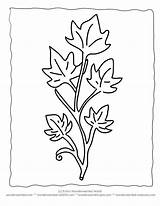 Template Ivy Leaf Leaves Coloring Drawing Pages Printable Crafts Sheets Drawings Templates Cut Plant Wonderweirded Outlines Wildlife Getdrawings Huge Gift sketch template