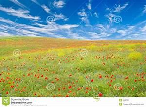 Wiese Mit Blumen : wiese mit mohnblumen cornflowers gelbe blumen stockfoto ~ Watch28wear.com Haus und Dekorationen