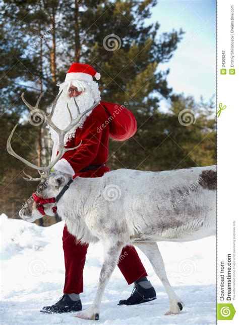 santa   reindeer stock photo image  holiday