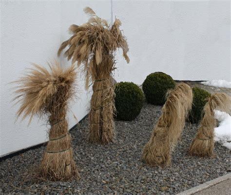 Gräser Winterfest Machen gr 228 ser und binsen richtig 252 berwintern