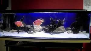 Liter Aquarium Berechnen : moje 300 litrowe akwarium my 300 liter aquarium youtube ~ Themetempest.com Abrechnung