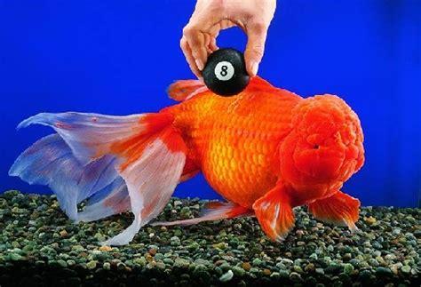 le plus gros aquarium du monde le monde de record le d aquarium