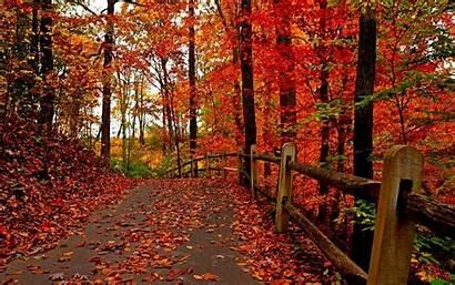 Fall Screensaver Screensavers Autumn