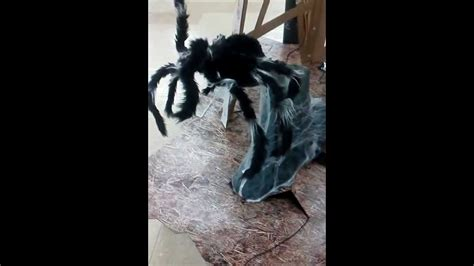 Spirit Halloween Animatronics Youtube by Spirit Halloween Jumping Spider Animated Props Youtube