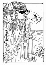 Caravan Coloring Camel Designlooter Animal sketch template