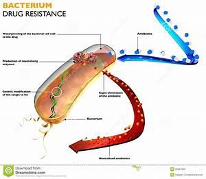Resistance Of Bacteria To Antibiotics Stock Illustration