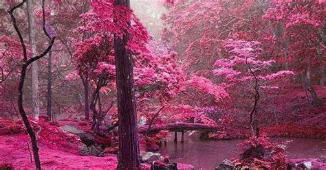foto de ShowMe Nan: Pink Forest Ireland