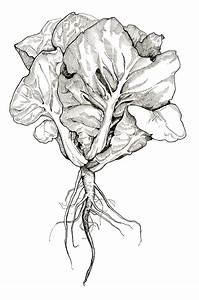 Illustration Archives - INK-DWELLINK-DWELL