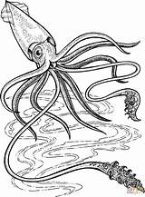 Squid Giant Coloring Printable Deep Ocean Colossal Supercoloring Sea Drawing Colouring 5e Animals Robot кальмар Creatures Template Adult Firefly Kraken sketch template