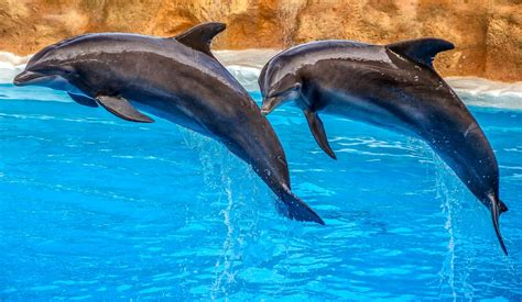 16 Of The Most Amazing Dolphin Pictures - LAUGHTARD