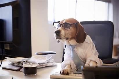 Dog Dogs Working Pet Desk Computer Names
