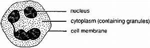 Basic Malaria Microscopy  Part I And Ii   Learning Unit 7