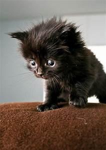 Tiny Little Cutiepie; Black Kitten Cute Baby | Pics Of ...