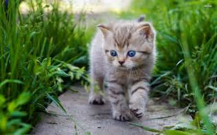 baby cats for baby cats wallpaper