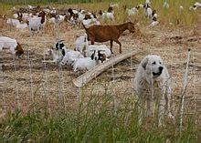 livestock guardian dog wikipedia