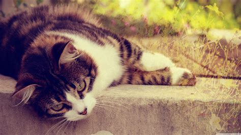 Cat 4k Ultra Hd Wallpaper And Background Image 3840x2160