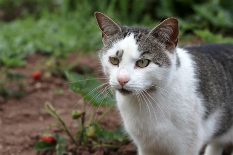marder gegen katze katze gegen marder wk 0051 ultrasonic gegen marder hund