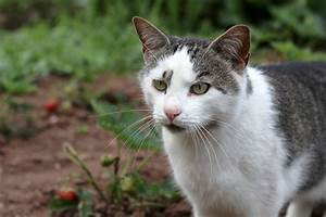 Katzen Aus Garten Vertreiben : fremde katzen im garten vertreiben ostseesuche com ~ Frokenaadalensverden.com Haus und Dekorationen