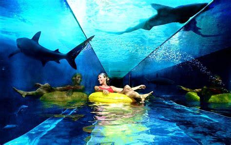 atlantis the palm hotel aquarium fish дубаи