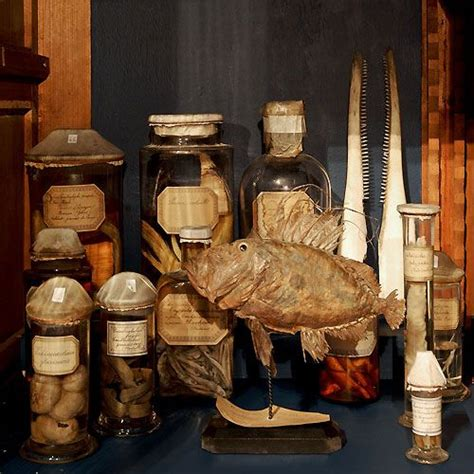 cabinet de curiosite cabinet de curiosit 233 s strange stuffs