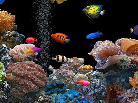 fish wallpaper hd tropical fish wallpaper wallpapersafari Tropical