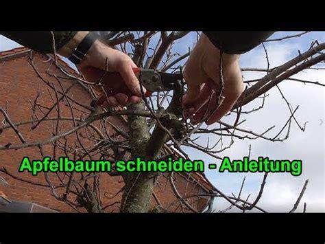 apfelbaum schneiden anleitung apfelbaum richtig schneiden anleitung apfelb 228 ume