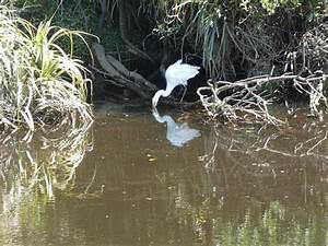 White Heron Sanctuary Tours  Whataroa