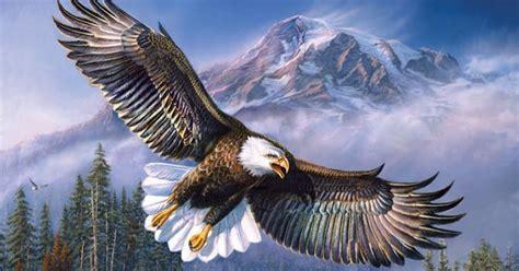 gambar wallpaper burung elang gudang wallpaper