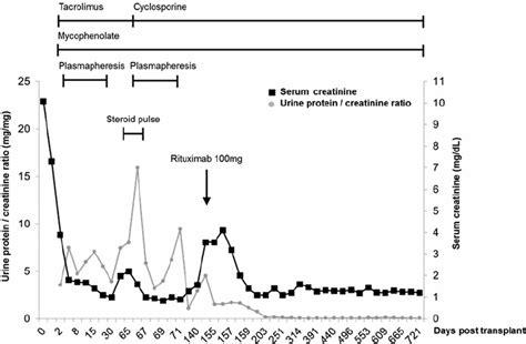what is serum creatinine mccnsulting web fc2