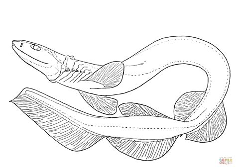 Kleurplaat Walvishaai by Frilled Shark Coloring Page Free Printable Coloring Pages